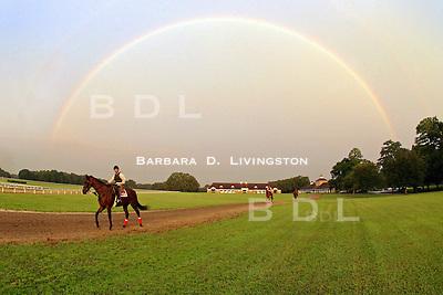 scenic, mood, horse racing, pretty, racehorse, horse, equine, racetrack, track, saratoga