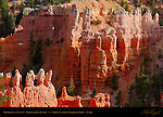 Fairyland Hoodoos at Sunset, Fairyland Canyon, Bryce Canyon National Park, Utah