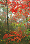 Autumn, Great Smoky Mountains National Park