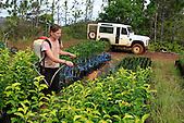 Fertilisation foliaire sur porte-greffes d'agrumes (exploitation La Ferme du Sud, Mont-Dore)