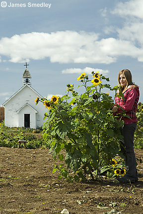 Young girl standing beside sunflowers