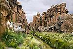 Pampas Grass (Cortaderia sp) and Peruvian Feathergrass (Jarava ichu) in canyon, Ciudad de Piedra, Andes, western Bolivia