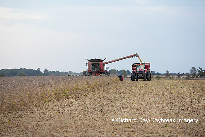 63801-07211 Soybean harvest with Case IH combine in Marion Co. IL