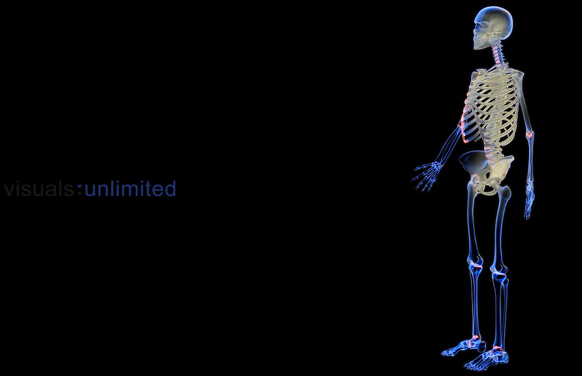 An anterolateral view (left side) of the skeletal system. Royalty Free