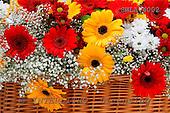 Carl, FLOWERS, photos, SWLA4002,#f# Blumen, Natur, flores, naturaleza