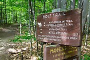 Mt Cardigan State Park - Holt Trail which climbs to the summit of Cardigan Mountain in Orange , New Hampshire USA.