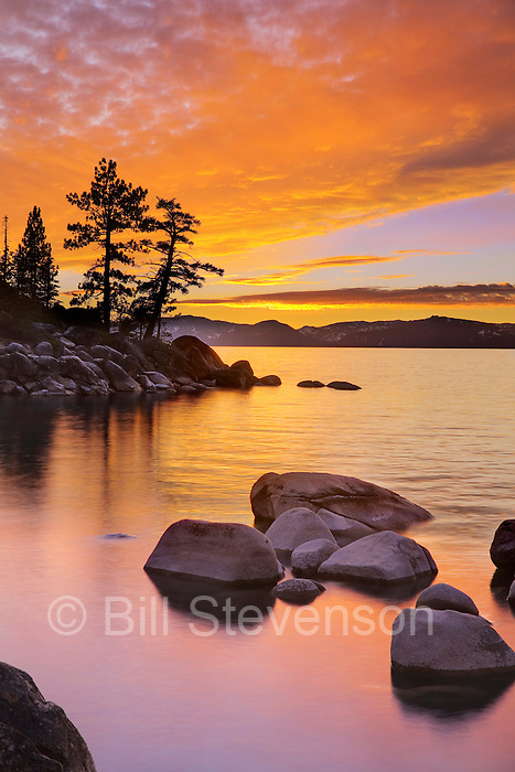 A photo of a Lake Tahoe sunset and silhouetted pine trees.