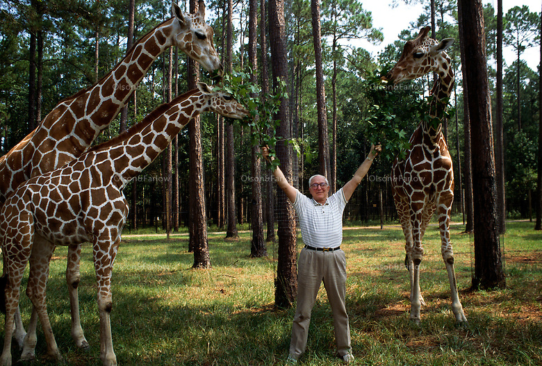 Howard Gilman at White Oak Plantation with his giraffes. White Oak is a 75,000 acre wildlife breeding, research and training facility in Nassau County. <br /> The Gilman family, founders of Gilman Paper Co. in Georgia, bought White Oak Plantation in the late 1930s. Howard Gilman died in 1998, leaving a foundation to run the White Oak Conservation Center. A patron of the arts, Gilman's collection of paintings was given to the Metropolitan Museum of Art. The facility in north Florida has served as a dance rehearsal studio for Mikhail Baryshnikov.