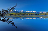 Tree snag reflected in Pyramid Lake<br /> Jasper National Park<br /> Alberta<br /> Canada