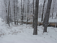 FOREST_LOCATION_90158