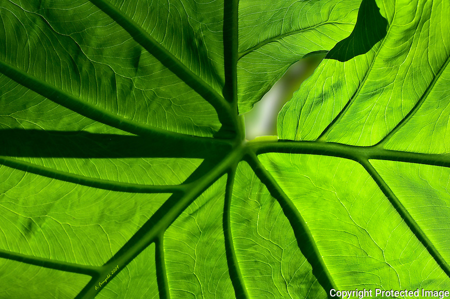 Sunlight through Palm Leaf, Green Palm Leaf, Miami Nature<br />