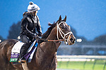 November 1, 2018: Liam the Charmer, trained by Michael W. McCarthy, exercises in preparation for the Breeders' Cup Turf at Churchill Downs on November 1, 2018 in Louisville, Kentucky. Jamey Price/Eclipse Sportswire/CSM