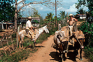Cuba, March 1992: Tobacco farmer with a traditional sledge pulled by a pair of oxen in Vinales area, Cuba.