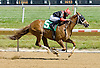 Foolish Comment winning at Delaware Park on 6/23/12
