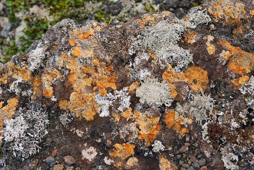 Lichen & Igneous Rock, Landmannalaugar, Iceland