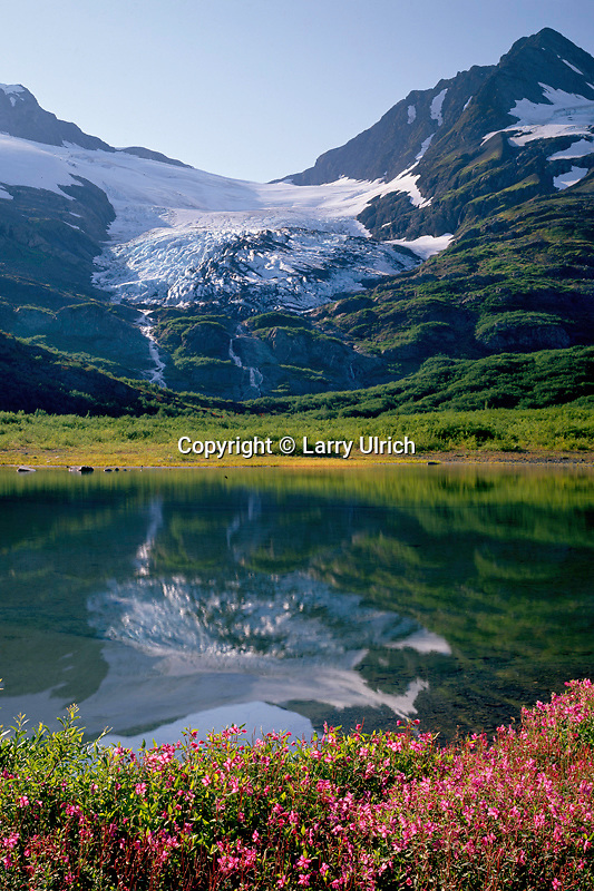 Dwarf fireweed,  Divide Lake<br />   and Shakespeare Glacier from Portage Pass<br /> Chugach National Forest<br /> Kenai Mountains,  Alaska