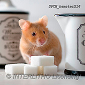 Xavier, ANIMALS, REALISTISCHE TIERE, ANIMALES REALISTICOS, photos+++++,SPCHHAMSTER216,#A#, EVERYDAY ,funny