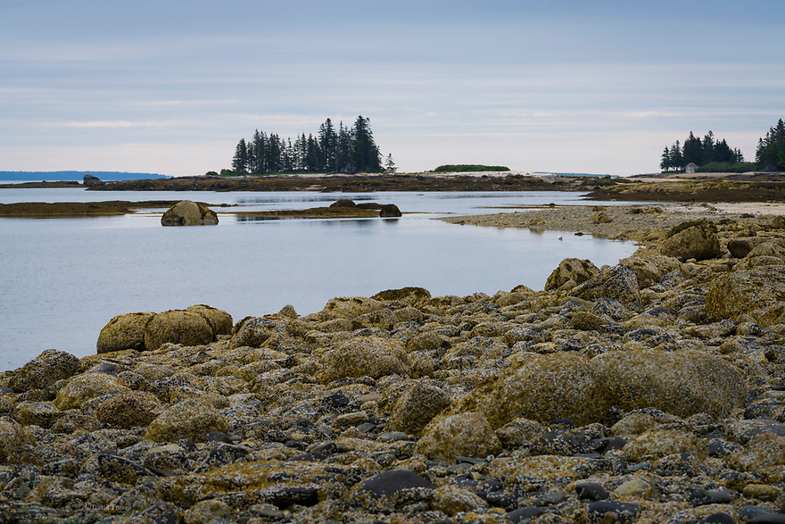 Rough coast line, Brooklin, Maine, USA.