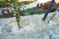 recently planted vines vineyard quinta do seixo sandeman douro portugal