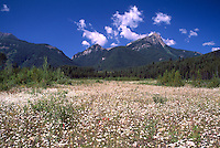 Rocky Mountains, Canadian Rockies, BC, British Columbia, Canada - Upper Elk Valley near Elkford, Summer