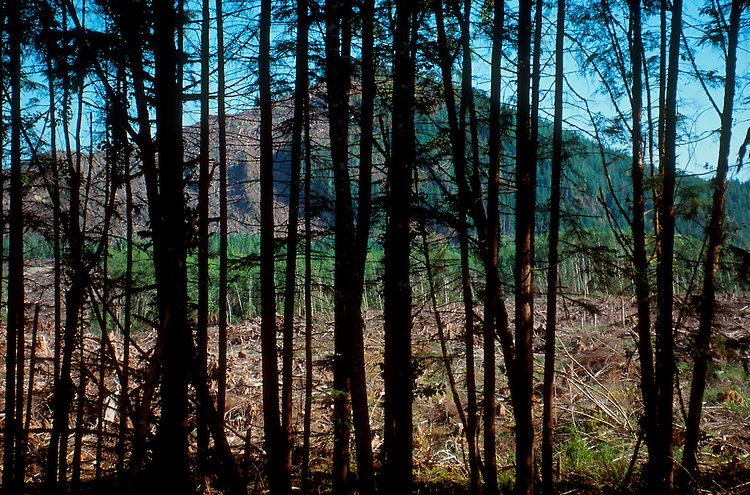 Logging, Washington State, clear-cut hill screened by a forest buffer, Olympic Peninsula, Washington State, Pacific Northwest, USA,