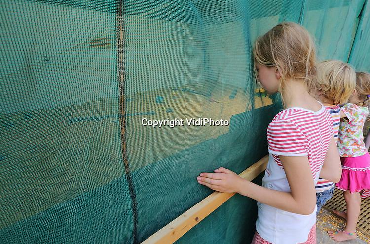 Foto: VidiPhoto<br /> <br /> MALDEN - Inspecteurs van de Voedsel en Waren Autoriteit (VWA) hebben maandag de ma&iuml;sbak van de Speelboerderij van Bert Hopman uit Malden bij Nijmegen afgegrendeld en verzegeld. Het enige ma&iuml;sbad van Nederland is volgens de inspecteurs onhygi&euml;nisch en gevaarlijk. Kinderen zouden kunnen stikken in de ma&iuml;s. De ruimte, vergelijkbaar met een ballenbak, is slechts een paar decimeter diep en twaalf jaar lang zonder problemen en klachten gebruikt, aldus eigenaar Hopman. De oud-varkenshouder is verontwaardigd over de actie van de VWA, die zich volgens hem weer eens wil profileren over de rug van ondernemers. Hij is van plan om deze kwestie voor de rechter uit te vechten. Boze bezoekers gingen in discussie met de inspecteurs, die zich daardoor zo bedreigd voelden dat ze er vandoor gingen. De VWA verbood terloops ook het gebruik van de skelterbaan omdat er te weinig bewijzering was aangebracht.