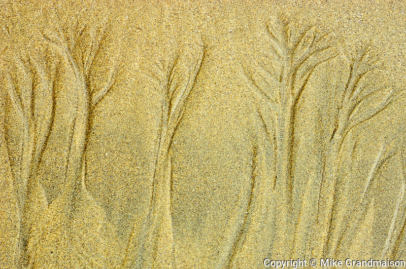sand patterns on beach on shore of Pacific Ocean<br /> Pacific Rim National Park<br /> British Columbia<br /> Canada