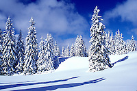 snow, trees, Switzerland, Vaud, Jura Mountains, Europe, Picturesque snow covered evergreen forest in the winter in the Jura Mountains.