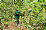 Anti-poaching snare removal team member, John Okwilo, noting location of illegally cut wood, Kibale National Park, western Uganda