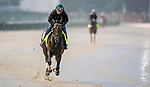 September 3, 2020: South Bend exercises as horses prepare for the 2020 Kentucky Derby and Kentucky Oaks at Churchill Downs in Louisville, Kentucky. The race is being run without fans due to the coronavirus pandemic that has gripped the world and nation for much of the year. Scott Serio/Eclipse Sportswire/CSM
