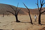Désert du Namib. Parc national du du Namib Naukluft,  Acacia pétrifié de Deadvlei et dunes de Sossusvlei. Namibie. Afrique.Namibia; Africa