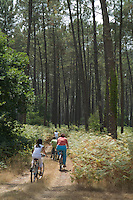 Family mountain biking through Landes Forest, Aquitaine, France.