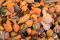 NWA Democrat-Gazette/J.T. WAMPLER Decorative gourds and pumpkins are displayed at the Rainbow Curve Fall Harvest Pumpkin Stand in Bentonville Wednesday, Sept. 23, 2015.