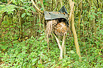 Traditional bee hive for harvesting honey, Bigodi, western Uganda