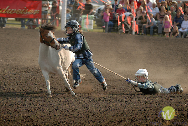Wild Pony Race at Olds Fair (olds Agicultural Society)