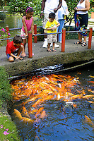 Children enjoy feeding Koi in the ponds surrounding the Byodo-in Temple located in the Valley of the Temples on Windward Oahu.