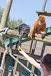 Feeding time at the Owl and Monkey Haven on the Isle of Wight