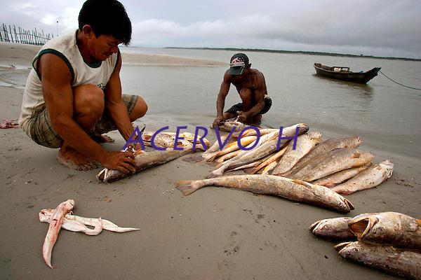 O pescador artesanal Alonso Martins do Carmo, 33, conhecido como Candir&uacute;, realiza a retirada do grude (&oacute;rg&atilde;o interno com alto valor comercial, usado pela ind&uacute;stria farmac&ecirc;utica e cosm&eacute;tica), de peixes da esp&eacute;cie Corvina ap&oacute;s a despesca realizada nas proximidades da praia de Paxic&uacute; na Reserva Extrativista Marinha M&atilde;e Grande localizada no litoral do Par&aacute;, na foz do rio Amazonas.<br /> Curu&ccedil;a, Par&aacute;, Brasil <br /> Foto:Paulo Santos<br /> 18/02/2011