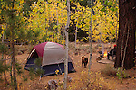 Fall camping at Buckeye Campground, Bridgeport, California