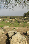 Israel, Shephelah, site of the ancient Synagogue in Hurvat Midras