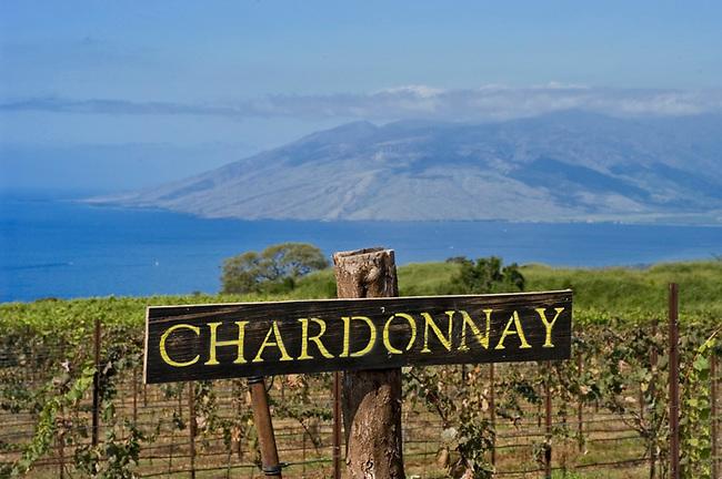Vineyard of Tedeschi Vineyards on Island of Maui, Hawaii.