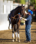 OCT 28: Breeders' Cup Juvenile  entrant Maxfield, trained by Brendan P. Walsh, gallops at Santa Anita Park in Arcadia, California on Oct 28, 2019. Evers/Eclipse Sportswire/Breeders' Cup