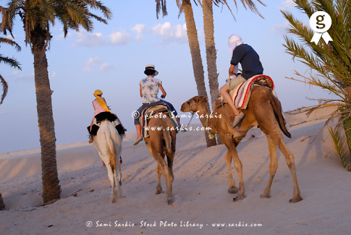 Tunisia, Douz, Sahara Desert, family riding three camels, rear view (Licence this image exclusively with Getty: http://www.gettyimages.com/detail/sb10065474dz-001 )