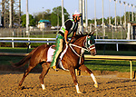 April 27, 2019 : Street Band works out  at Churchill Downs, Louisville, Kentucky, preparing for a start in the Kentucky Oaks. Owner J. Larry and Cindy Jones, Ray Francis, trainer J. Larry Jones. By Istan x Street Minstrel (Street Cry) Mary M. Meek/ESW/CSM
