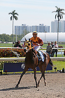 HALLANDALE BEACH, FL - JANUARY 28:  #3 Curlin's Approval with jockey Luis Saez returns from the race after winning the Hurricane Bertie G3 Stakes on Pegasus World Cup Invitational Day at Gulfstream Park on January 28, 2017 in Hallandale Beach, Florida. (Photo by Liz Lamont/Eclipse Sportswire/Getty Images)
