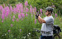 Photo by Stephen Brashear.Richard Chou of Kirkland, Wash., makes a photo of fireweed along the John Wayne Pioneer Traild between Hyak, Wash., and Rattlesnake Lake near North Bend, Wash., Sunday Aug. 17, 2008.