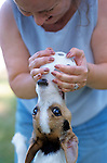 Woman holding wuffle ball with Jack Russell Terrier biting it and suspended in air