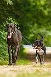 2016085 Merritt Dogs