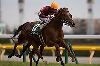 02-18-17 Diamond Stakes Tokyo Japan
