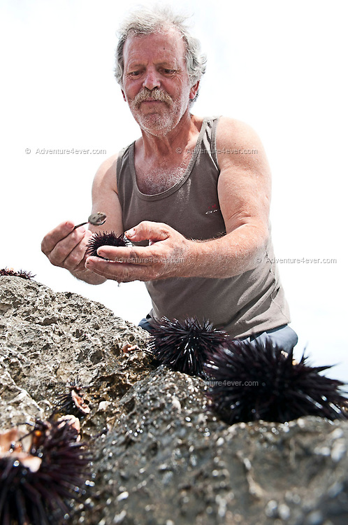 """Monemvasia, Peloponnesos, Greece, May 2013. Mountain man Christos carrefully opens a sea urchin to extract the """"caviar"""", a local delicatesse. The hiking trail from Agios Fokas connects the area of Monemvasia with the Malea Peninsula and follows a rocky coastal trail passing several small beaches, to end at the Kastania Caves. The Peloponnese peninsula offers beautiful hikes along the bays and capes of the Mani and Monemvasia and the interior Taygetos. Venture inland, away from the crowds, and there are some surprises in store: snow-capped mountains, limestone gorges, shady rivers, crumbling castles, tower-villages, fir forests, frescoed chapels, and solated monasteries. Ancient mountain villages interrupt the olive groves that line the rugged coastline that is surrounded by deep blue and turquoise waters of the Mediterranean.  Photo by Frits Meyst/Adventure4ever.com"""
